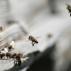 Včely budou řídit NASA