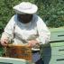 První jarní kontroly včel