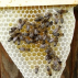 Včela - svobodná, velká, mírná ...