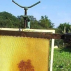 Kontinuální získávaní medu - odvíčkovač plástů