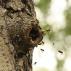 Stopování včel
