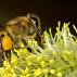 Začátek včelařské sezóny